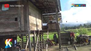 VIDEO: Olu, Desa Produktif di Sigi yang Tak Tersentuh Pembangunan