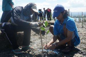 Kurangi Resiko Bencana, JKM Oxfam Tanam 310 Bibit Mangrove di Teluk Palu