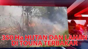 VIDEO: 350 Hektar Hutan dan Lahan di Dua Kecamatan di Touna Terbakar