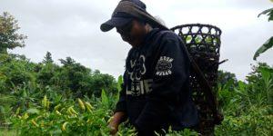 Pertanian Alami Wujudkan Kedaulatan Petani Kreatif