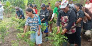 Tinggalkan Pupuk Anorganik, Petani Binaan DSLNG Rasakan Dampak yang Positif