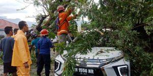 Angin Kencang di Palu, Mobil Mitsubishi Expander Tertimpa Pohon Tumbang