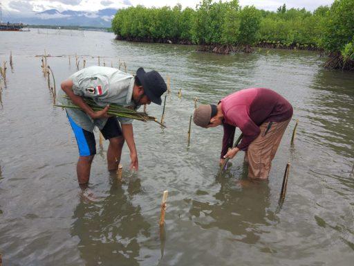 KPAP El Capitan Indonesia Ajak Masyarakat Parigi Kenal Mangrove Lebih Dekat