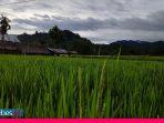 Tunjangan Duka, Cara Warga Desa Bora Mencegah Alih Fungsi Lahan