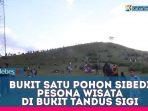 VIDEO : Bukit Satu Pohon Sibedi, Wisata Alam di Bukit Tandus Sigi