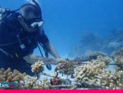 8.000 Hektare Terumbu Karang di Togean Hancur Akibat Destruktif Fishing