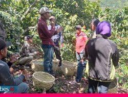 Kelompok KUPS asal Alitupu Belajar Pascapanen Kopi di Dombu