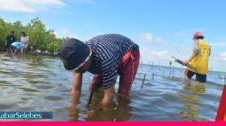 Mangrove Parimo