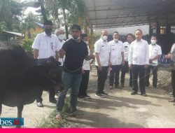 Dinas BMPR Sulteng Kurbankan 4 Ekor Sapi hasil Urunan Karyawan dan Staf